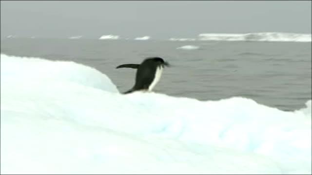 25 million dollar prize offered for global warming solution january 2007 penguin on iceberg iceberg - flightless bird stock videos & royalty-free footage