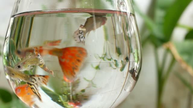 vídeos de stock, filmes e b-roll de milhões de peixes em vidro. - pequeno
