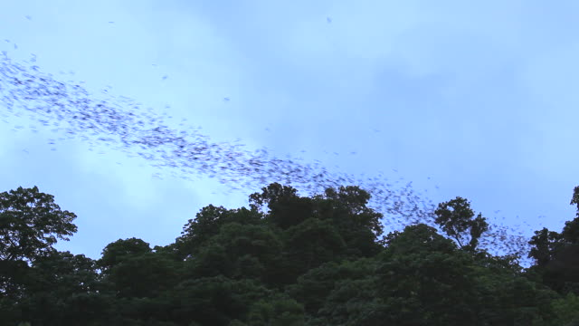 million of bats flying from cave at dusk - mass unit of measurement stock videos and b-roll footage