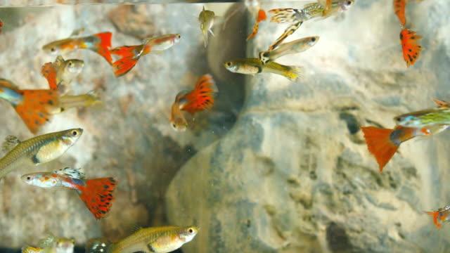Millions fish in aquarium.