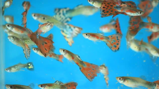 Millions Fish.