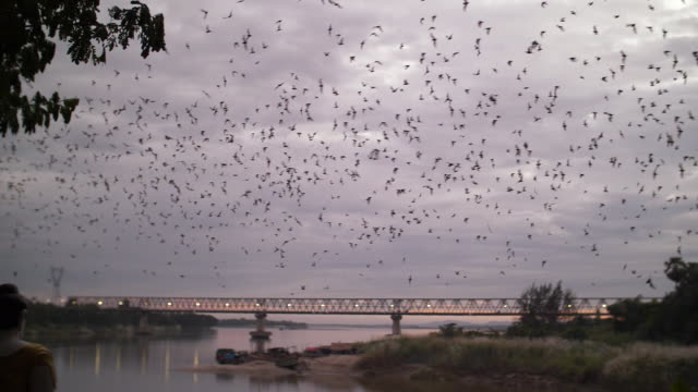 millions of bats leaving their cave to go on a hunt for food, myanmar. shot in slow motion. - wop productions stock-videos und b-roll-filmmaterial