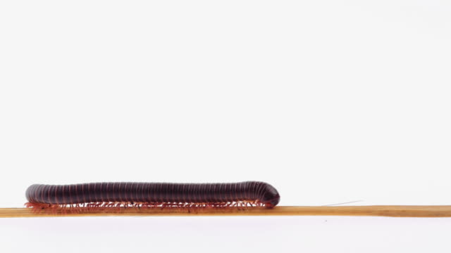 millipede - worm stock videos and b-roll footage
