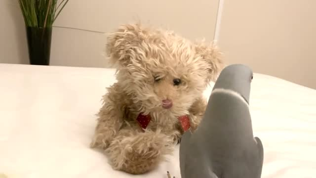 milo's new bff is this cute teddy bear. he can't stop talking and kissing it! cuteness overload! - sorghum stock videos & royalty-free footage