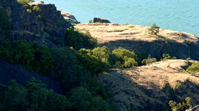 mima mounds earthquake mounds 2 rowena crest columbia river gorge wildflower meadow - 崖点の映像素材/bロール