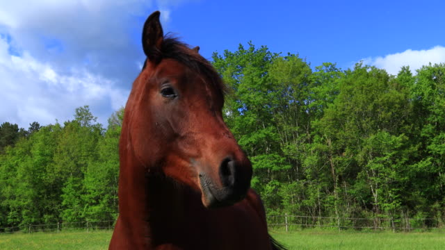 mindfulness, arab thoroughbred horses farm, domaine des 2 abbesses en vert hotel with character, malignac, mareuil sur belle, dordogne, perigord vert, nouvelle aquitaine, france, europe - nouvelle aquitaine stock videos and b-roll footage
