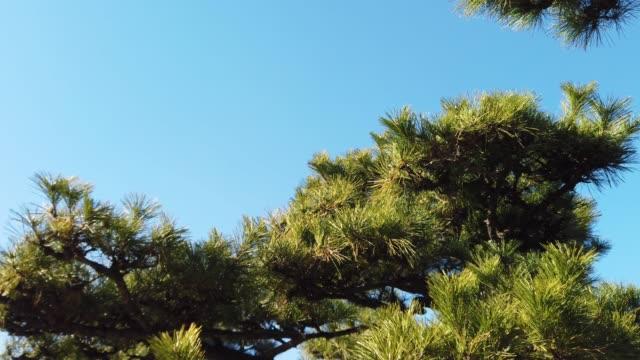 miniature pine forest - carrellata video stock e b–roll
