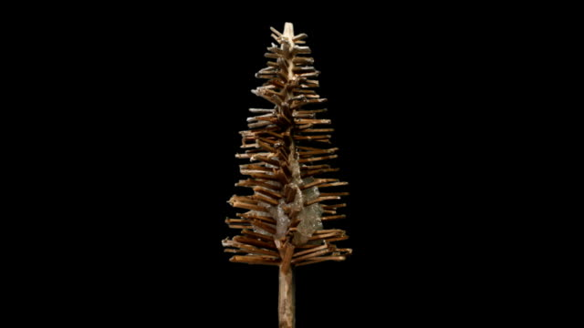 miniature stylised fir tree growing and icing over, with luma matte - thorn stock videos & royalty-free footage