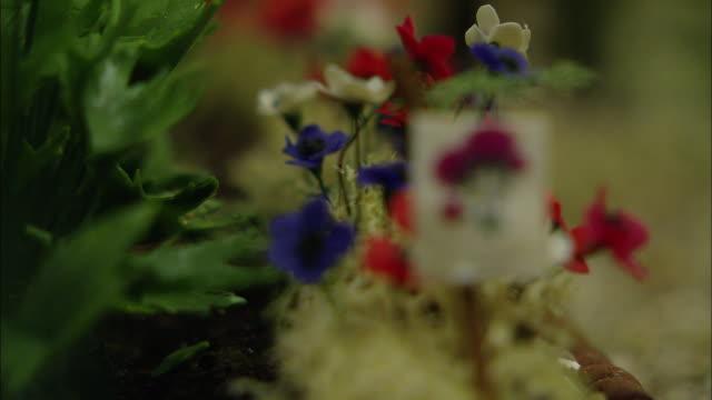 miniaturised late victorian scene, flowers, dolls house, leonardslee gardens, west sussex, uk - おもちゃの家点の映像素材/bロール
