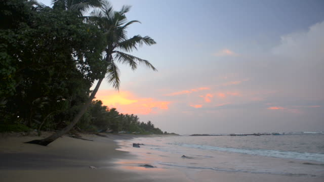 mirissa beach, palm trees at sunrise on the south coast of sri lanka, asia  - sri lanka stock videos and b-roll footage