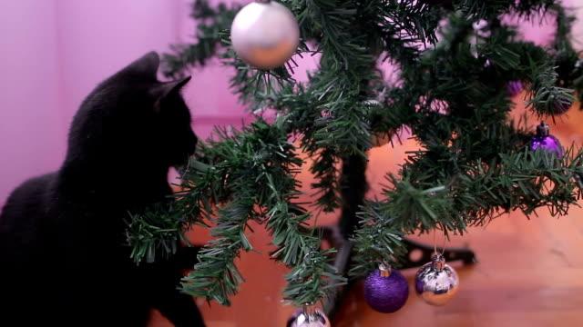 vidéos et rushes de le chat de mischief détruisent l'arbre de noël - espièglerie