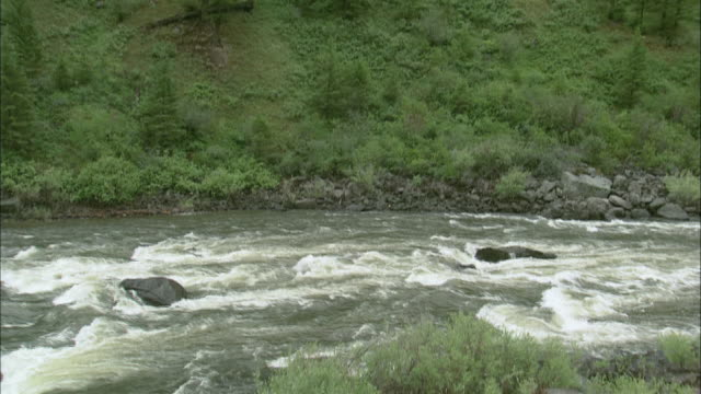 TU Missouri River rapids at the foot of a pine covered mountainside / United States