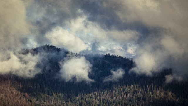 mist and cloud over thick forest in kings canyon - time lapse - sequoia stock videos and b-roll footage