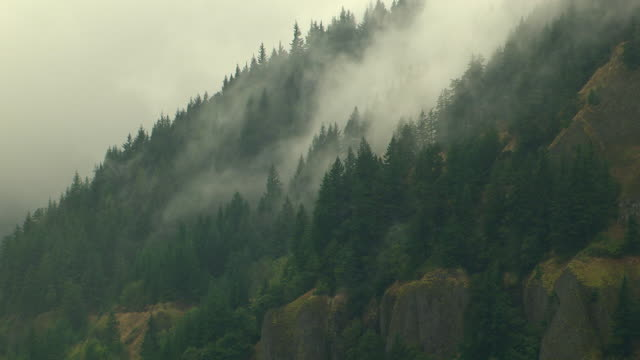 ws aerial mist covered forested mountains / oregon, united states - ravine stock videos & royalty-free footage