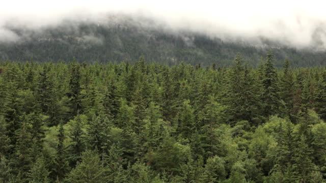 霧の上になった後、フォレスト(フル hd - アラスカ点の映像素材/bロール