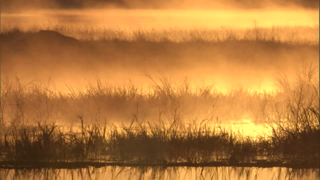 mist drifts across a marsh at sunrise. - marsh stock videos & royalty-free footage