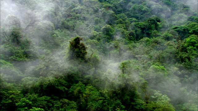 a mist drifts over a rainforest. - 生い茂る点の映像素材/bロール