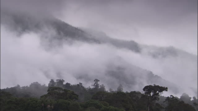 mist drifts over rainforest, papua new guinea - hill stock videos & royalty-free footage