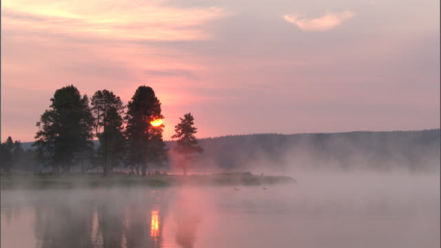mist drifts over trees and lake at sunset, yellowstone, usa - canada goose stock videos & royalty-free footage