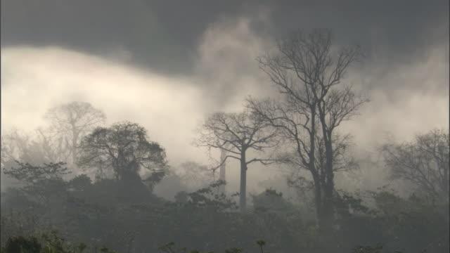 mist drifts through rainforest, panama - bare tree stock videos & royalty-free footage