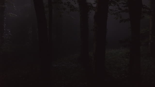 Mist fills a forest at night.