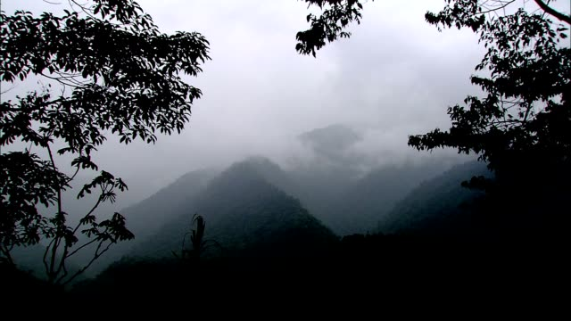 mist fills a rainforest in costa rica. - costa rica stock videos & royalty-free footage