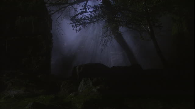 mist floats through an eerie forest at night. - shadow stock videos & royalty-free footage