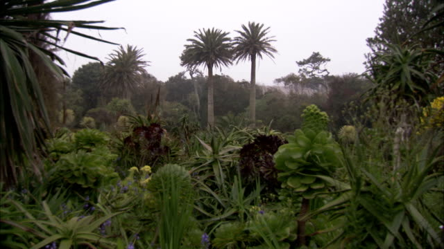 a mist hangs in the air surrounding the lush vegetation of tresco abbey gardens. available in hd. - isles of scilly stock videos & royalty-free footage