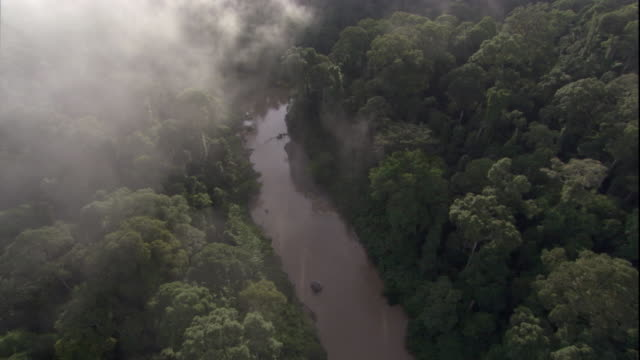 mist hangs over a rainforest river in borneo. available in hd. - river stock videos & royalty-free footage