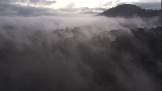 mist hangs over the rainforest, borneo. available in hd. - borneo stock-videos und b-roll-filmmaterial