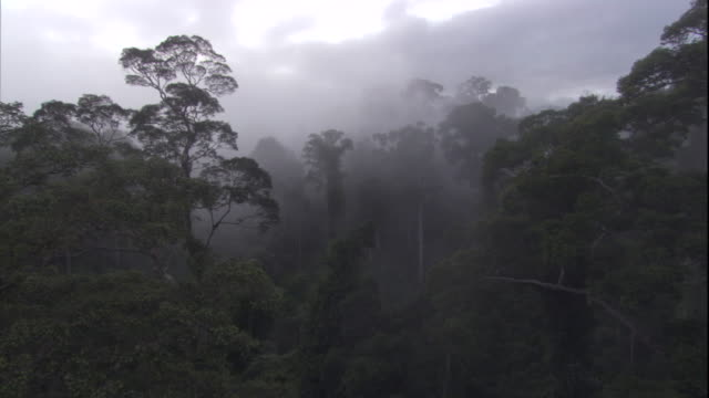 mist hangs over the rainforest in borneo. available in hd. - copertura di alberi video stock e b–roll