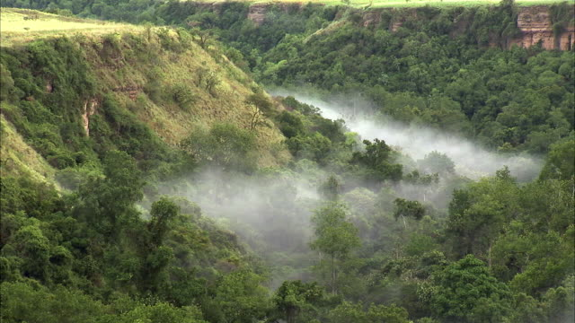 Mist in forested Kyambura gorge, Uganda