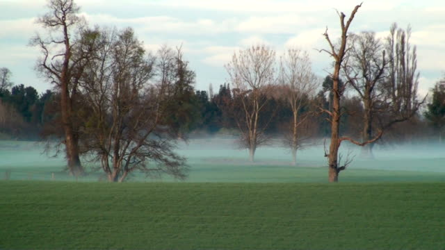 Mist in the country