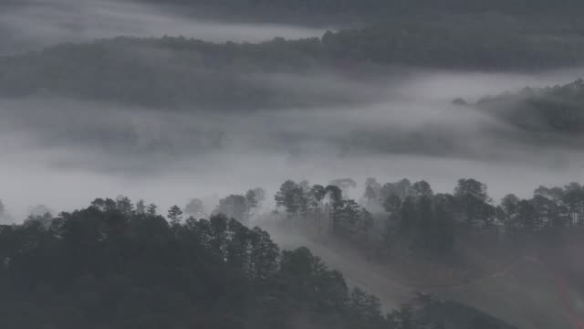 vídeos de stock e filmes b-roll de mist moving around pine forest - pine