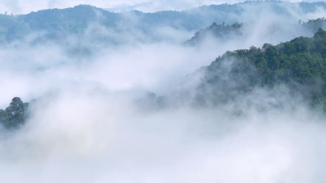 tl mist moving over rainforest. - digital composite stock videos and b-roll footage