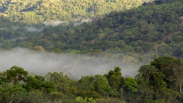 mist moving through the rainforest illuminated by the early morning sun - wide shot stock videos & royalty-free footage