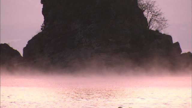 a mist on the sea of japan glows pink below the silhouette of a tree growing from the top of a rocky island. - toyama prefecture stock videos and b-roll footage