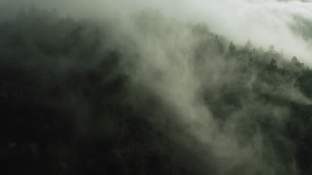 mist over mountain in california - evergreen stock videos & royalty-free footage
