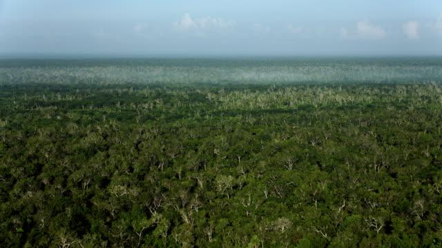 mist over rainforest in yucatan mexico - 北半球点の映像素材/bロール