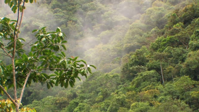 ha ws mist over rainforest treetops/ manu national park, peru - copertura di alberi video stock e b–roll