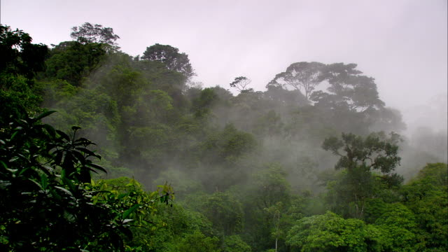 mist rises above the tree canopy of a costa rica rain forest. - costa rica stock videos & royalty-free footage