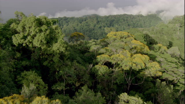 mist rises from the dense canopy of a rainforest. available in hd. - costa rica stock videos & royalty-free footage