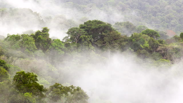 Mist rising from the rainforest canopy