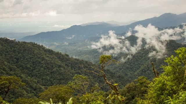 mist rising from the rainforest viewed from cordillera de los guacamayos, ecuador - ecuador stock videos & royalty-free footage