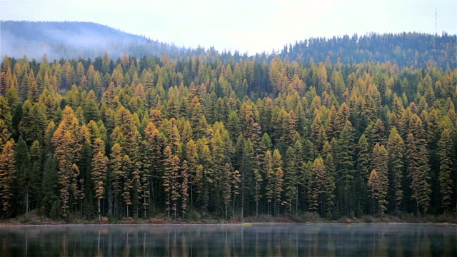 WS Mist rising off calm mountain lake with evergreen(Tamarac) trees turning autumn colors / Seeley Lake, Montana, United States