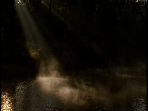 ms mist rising off river, bandhavgarh national park, india - national icon stock videos & royalty-free footage
