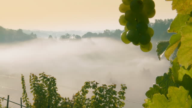 HD TIME-LAPSE: Mist Rising Out Of The Vineyard Valley