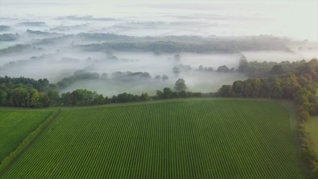 september 2019: mist rolls across the south downs national park beside the vineyards of the nyetimber estate as seen by drone. - land stock videos & royalty-free footage