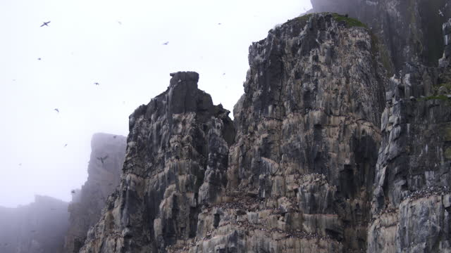 la misty auk and guillemot nesting cliffs with birds in flight - auk stock videos & royalty-free footage
