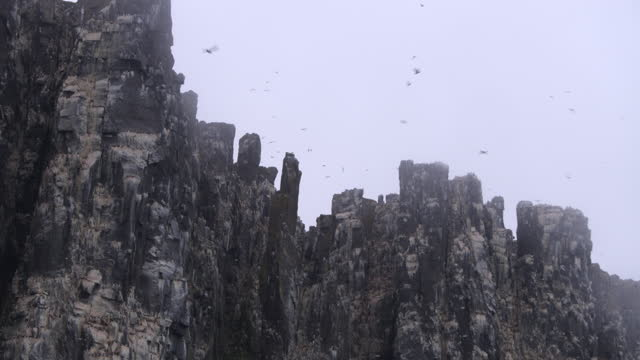 la misty auk and guillemot nesting cliffs with massed birds in flight - auk stock videos & royalty-free footage